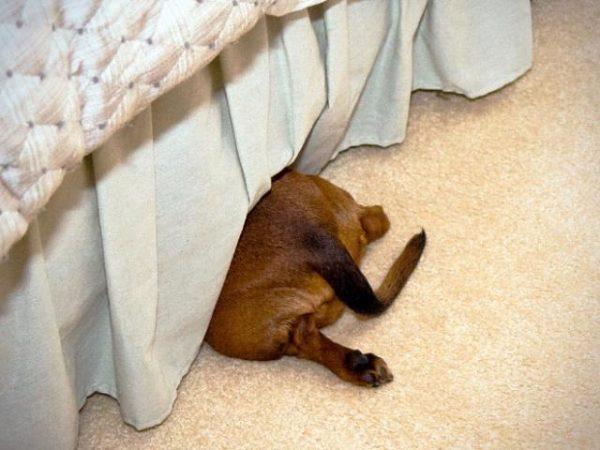 犬隠れんぼ7