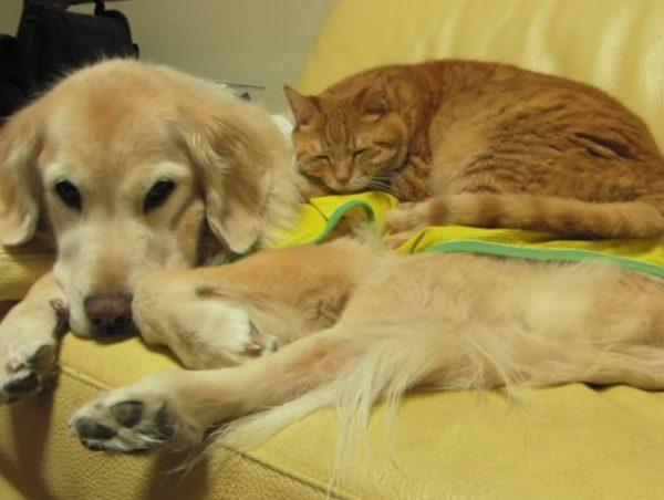 犬と猫 お昼寝2