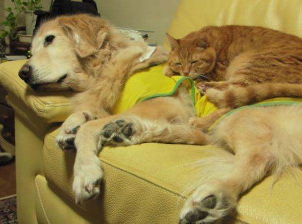 犬と猫 お昼寝4