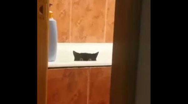魚盗む猫1