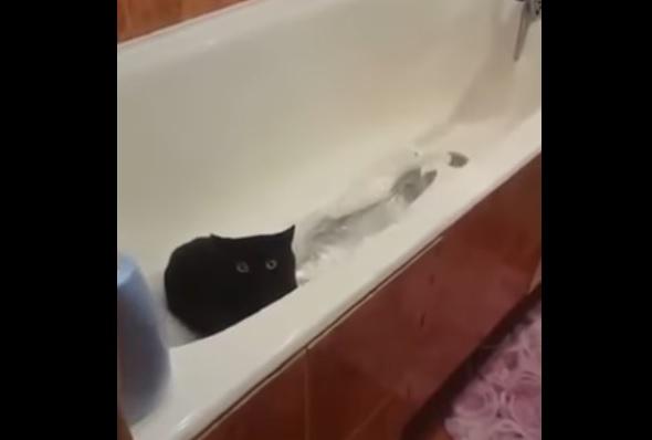 魚盗む猫3