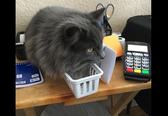 狭い場所猫1