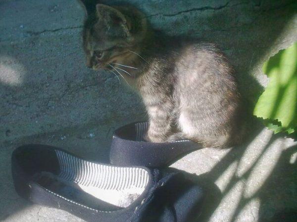 狭い場所猫9