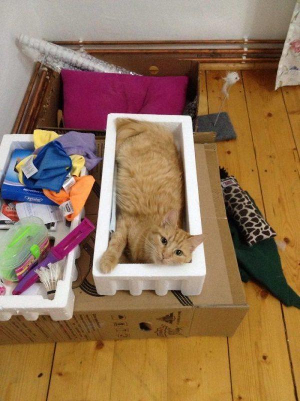 狭い場所猫10
