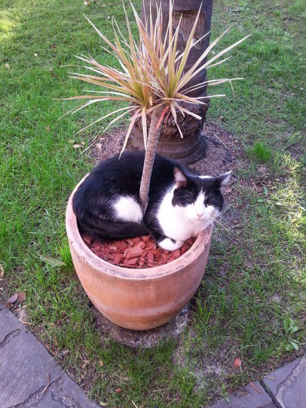 狭い場所猫11