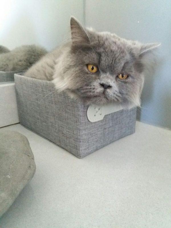 狭い場所猫2
