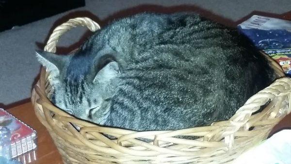 狭い場所猫5