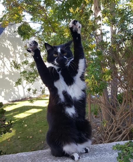 バンザイ猫11