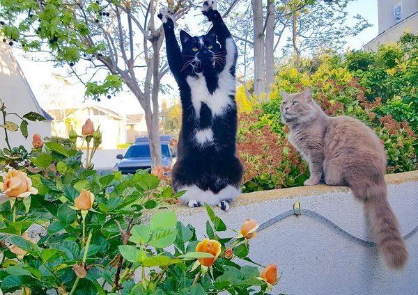 バンザイ猫14