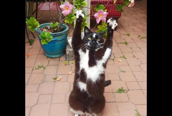 バンザイ猫1