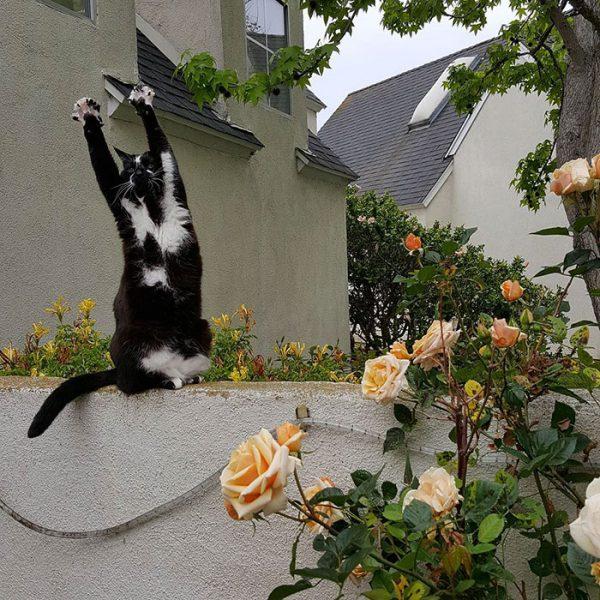 バンザイ猫2