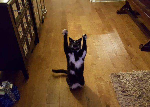 バンザイ猫4