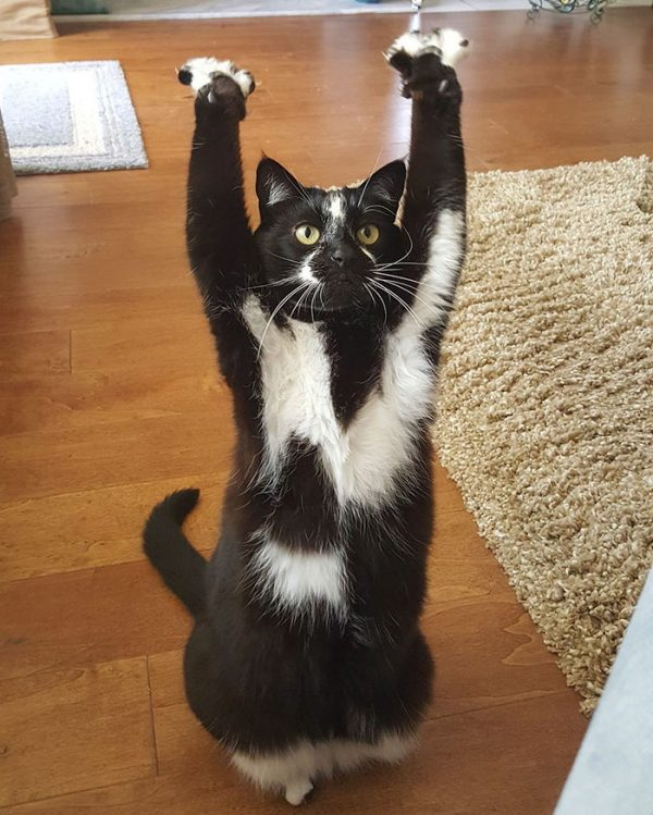 バンザイ猫6