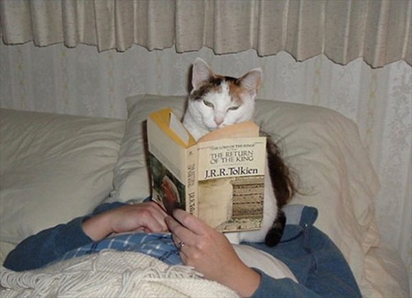 邪魔をしてくる猫5