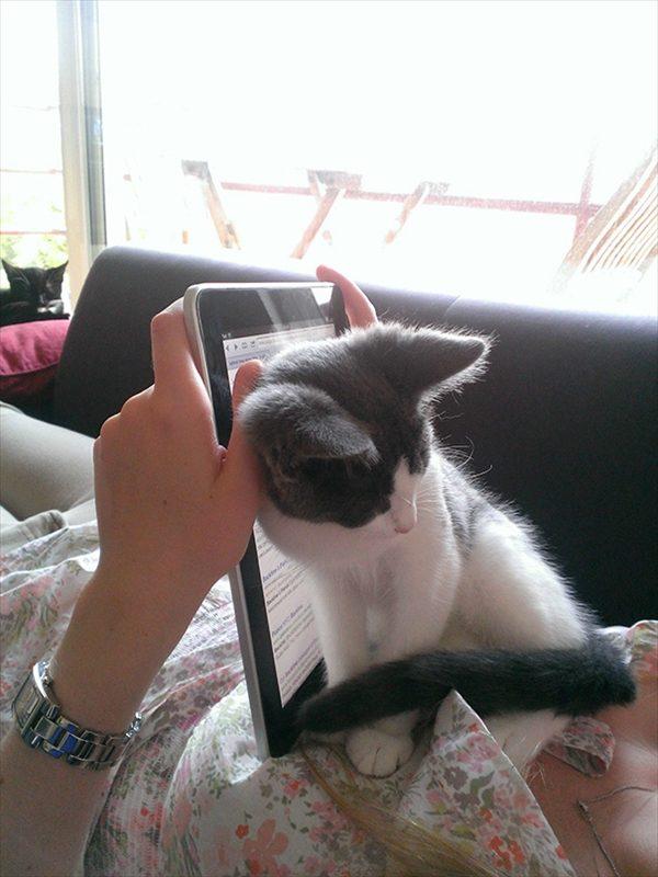 邪魔をしてくる猫8