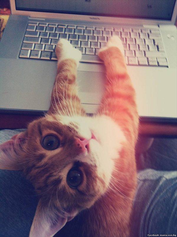 邪魔をしてくる猫10