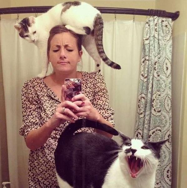 邪魔をしてくる猫11