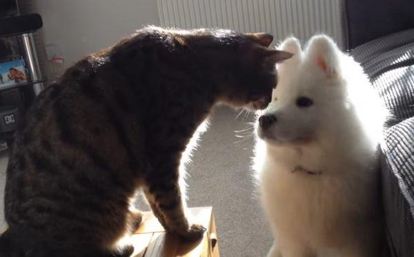 先住猫と新入り犬11