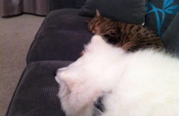 先住猫と新入り犬13