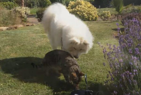 先住猫と新入り犬15
