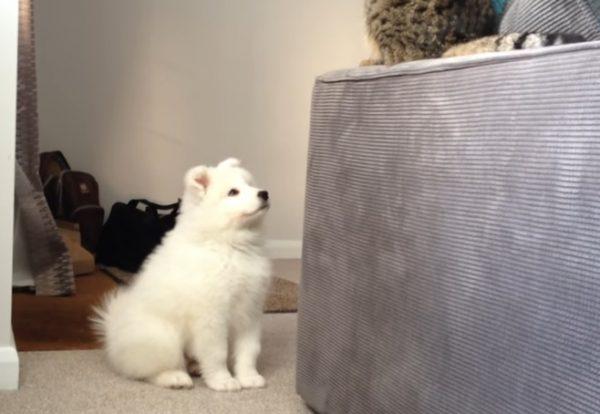 先住猫と新入り犬4