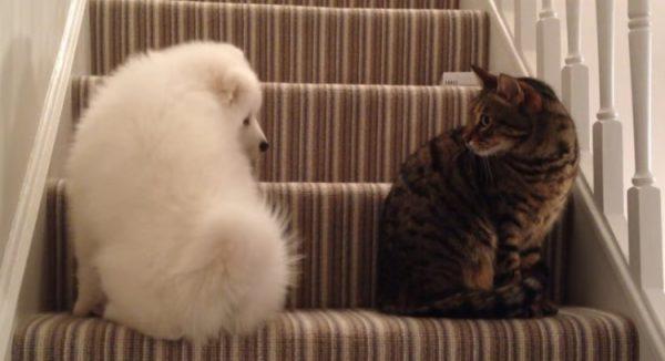 先住猫と新入り犬1