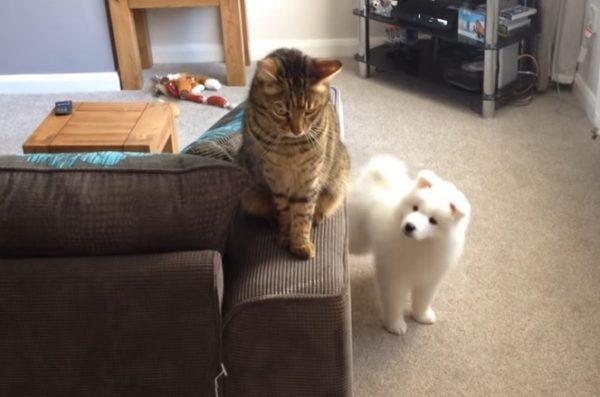 先住猫と新入り犬2