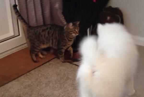 先住猫と新入り犬8