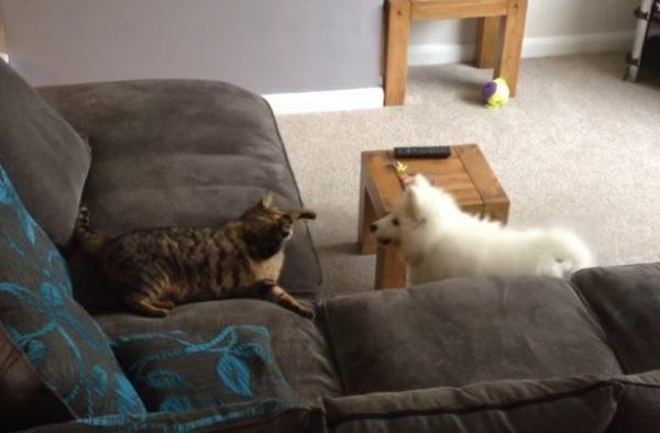 先住猫と新入り犬9
