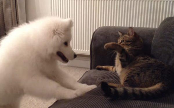 先住猫と新入り犬10