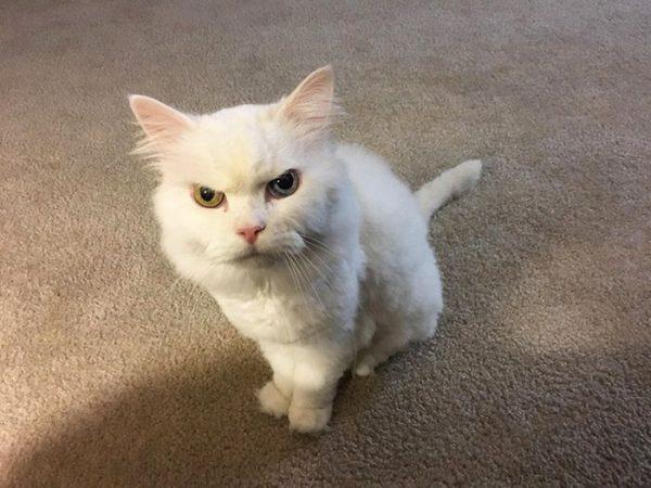 怒った顔の猫2