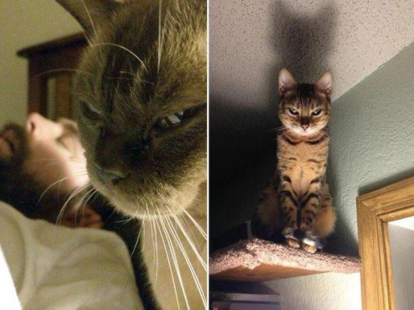 怒った顔の猫10