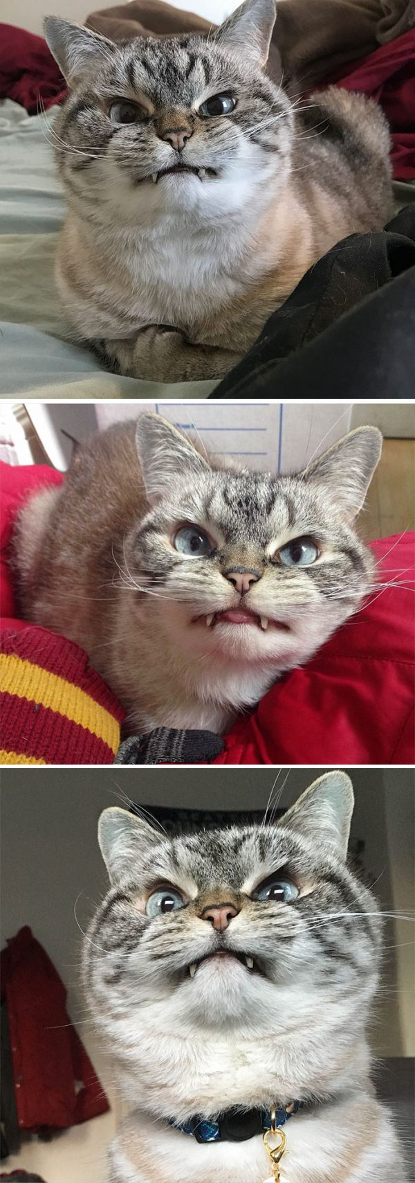 怒った顔の猫16