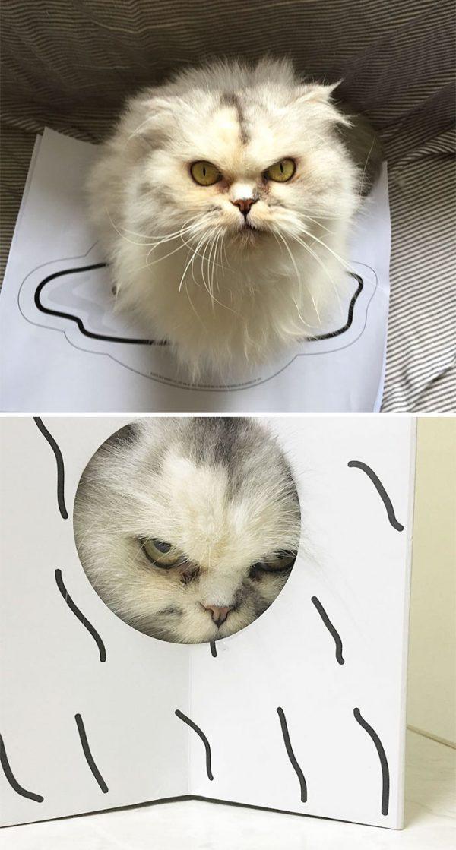 怒った顔の猫4