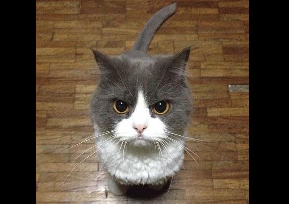 怒った顔の猫1