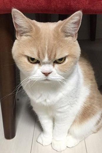 怒った顔の猫5