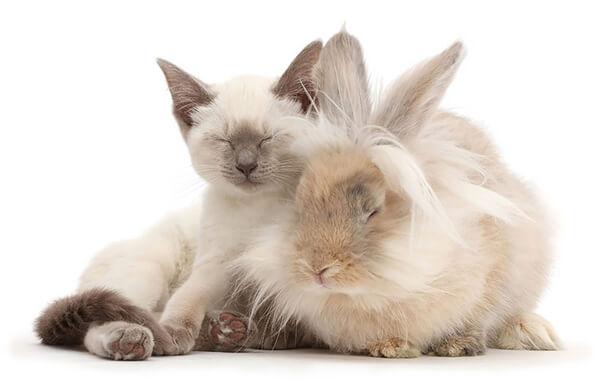 猫とウサギ 可愛い2