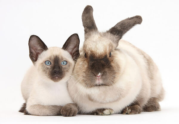 猫とウサギ 可愛い11