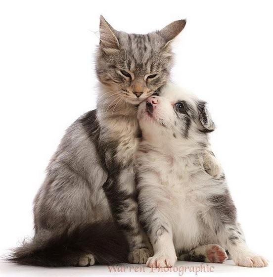 猫と子犬 可愛い
