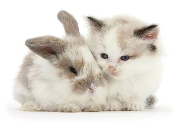 猫とウサギ 可愛い3