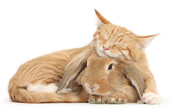 猫とウサギ 可愛い4