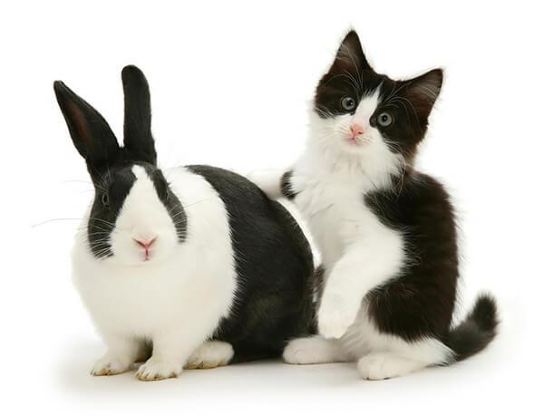 猫とウサギ 可愛い5