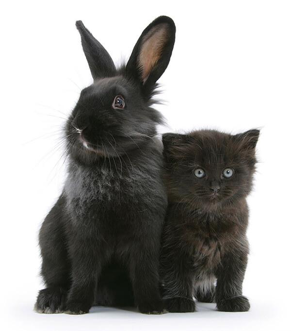 猫とウサギ 可愛い6