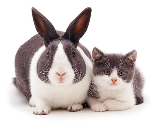 猫とウサギ 可愛い8