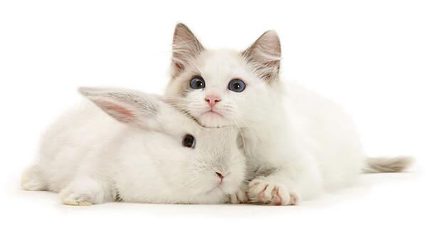 猫とウサギ 可愛い9