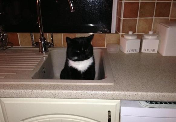 猫飼っていない 家1