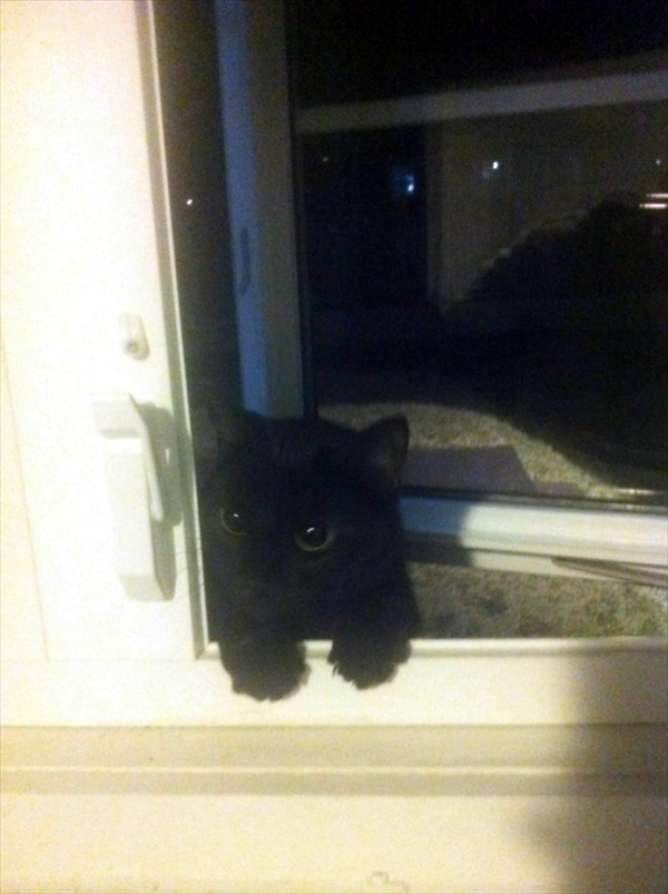 猫飼っていない 家8