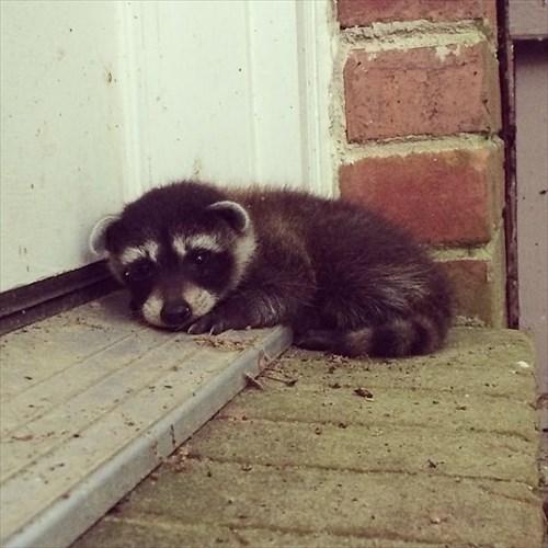 こんにちは 家を訪ねてきた動物9