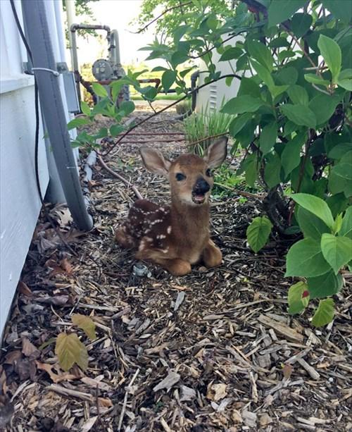 こんにちは 家を訪ねてきた動物12
