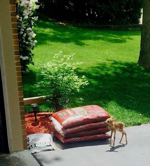 こんにちは 家を訪ねてきた動物16